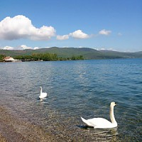 湖_冬の白鳥